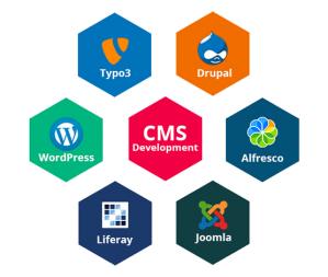 CMS Web Development Service Company in Delhi